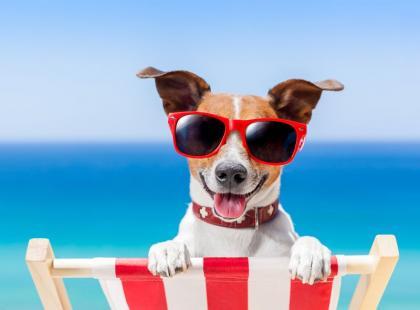 Jak zadbać o bezpieczeństwo zwierzaka w czasie wakacji?