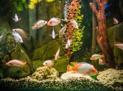 Jak założyć akwarium? Poznaj prostych 5 kroków!