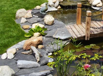 Jak założyć oczko wodne w ogrodzie?