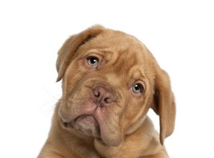 Jak zapobiegać nadwadze u psów?