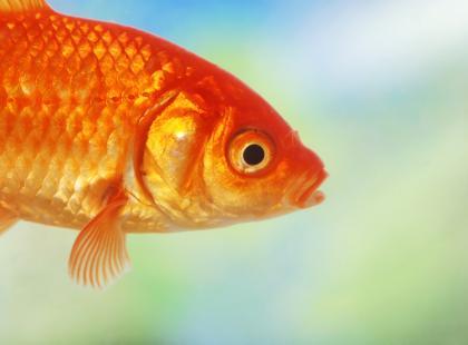 Jak zauważyć chorobę u ryb akwariowych?