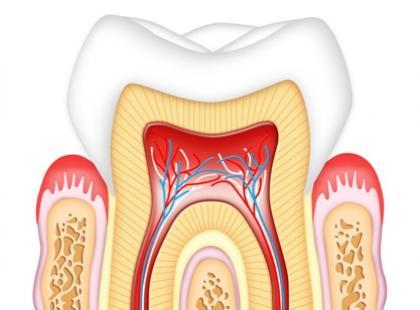 Jak zbudowane są zęby?