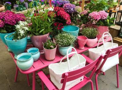 Jak zwalczyć szkodniki kwiatów doniczkowych?