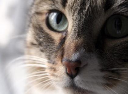 Jak żyć z kotem i nie zwariować - poradnik frustrata
