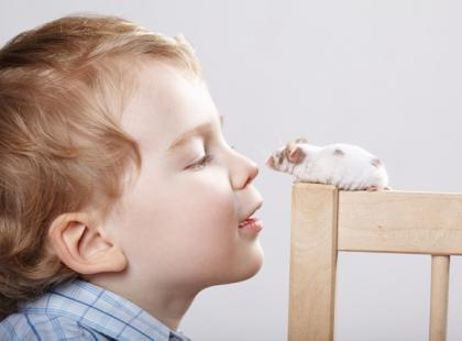 Jak żywić myszkę domową?