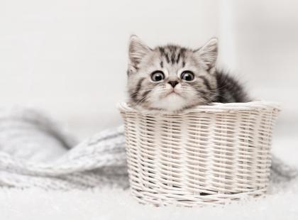 Jaką kuwetę dla kota wybrać?
