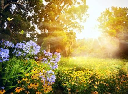 Jakie kwiaty ogrodowe lubią cień? Oto 5 roślin, które będą rosnąć w zacienionym miejscu!