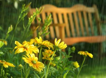 Jakie kwiaty powinnaś mieć w ogrodzie?