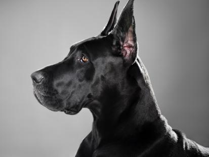 Jakie rasy psów są uznawane za najgroźniejsze? Zobacz!