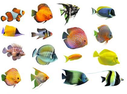 Jakie rybki wybrać do akwarium wielogatunkowego?