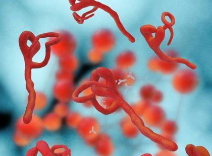 Jakie są objawy zakażenia wirusem Ebola?