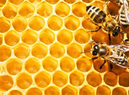 Jakie są zalety kitu pszczelego i miodu?