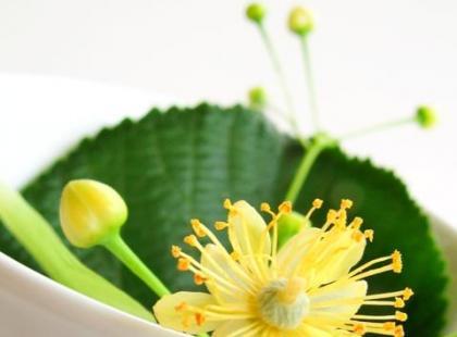 Jakie zioła są najlepsze dla Barana?