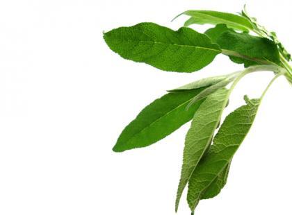 Jakie zioła są najlepsze dla Lwa?