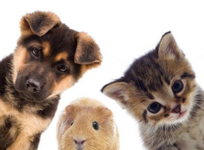 Jakie zwierzę domowe wybrać?