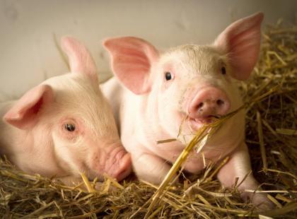Jemy o 400 milionów zwierząt hodowlanych rocznie mniej! Wege to już nie niszowa moda tylko styl życia