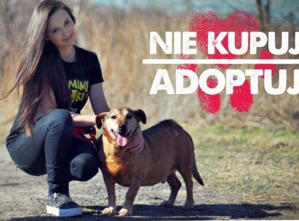 """Kampania społeczna """"Nie kupuj – adoptuj"""" z blogerkami!"""