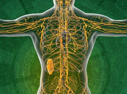 Kannabinoidy, czyli ile konopi jest w człowieku?