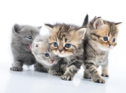 Karma dla małego kota - poradnik