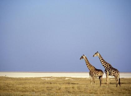 Kenia - w królestwie dzikich zwierząt