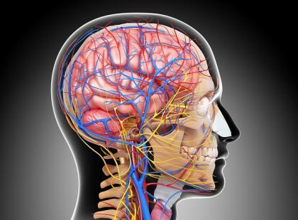 Komórki macierzyste nadzieją dla pacjentów po udarze mózgu