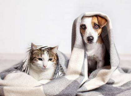 """Koniec wojny pomiędzy """"kociarzami"""" i """"psiarzami""""? Wiemy już kto jest mądrzejszy: pies czy kot!"""