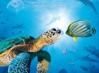 """Konkurs z filmem """"Ocean przygód 3D"""" w kinie Helios!!!"""