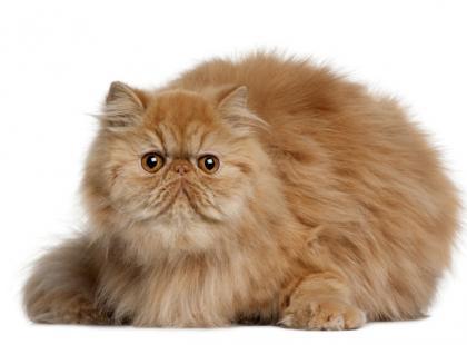 Kotka agreswywna wobec małego kota - czy to normalne?