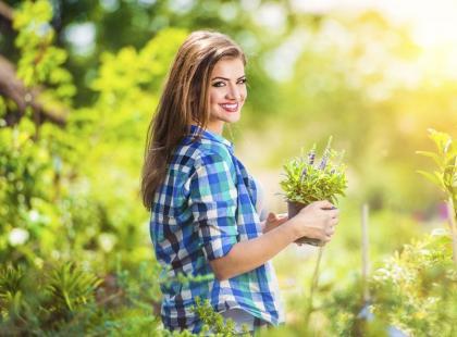 Krzewy za grosik: odmiany z gołym korzeniem
