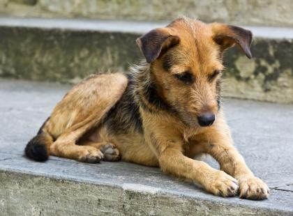 Krzysztof Psie Serce. Chciał ratować psy z rąk okrutnych właścicieli, a stał się ofiarą hejtu