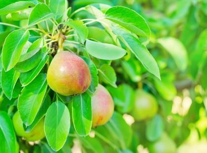 Które owoce i warzywa zbieramy w sierpniu?