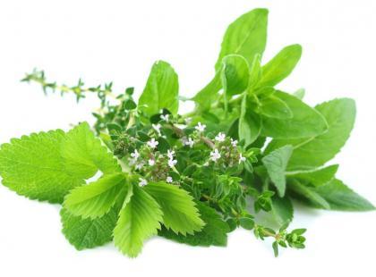 Które zioła wspomagają leczenie chorób serca i naczyń krwionośnych?