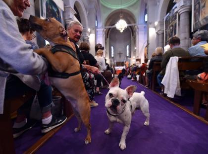 Kucyk i buldożek przed ołtarzem? Tak! I dostają błogosławieństwo. Gdzie jest kościół z mszą dla zwierząt?