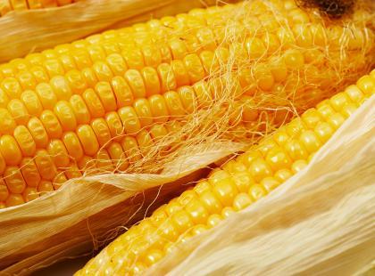 Kukurydza – smaczna w każdym towarzystwie