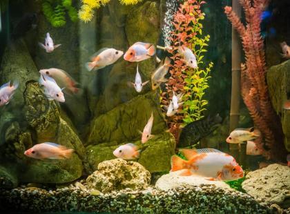 Kupujemy akwarium - szybki poradnik