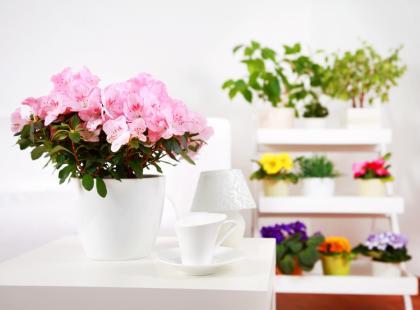 Kwiaty dla zapracowanych