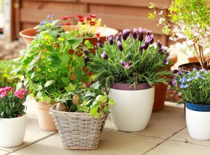 Kwiaty doniczkowe podczas urlopu