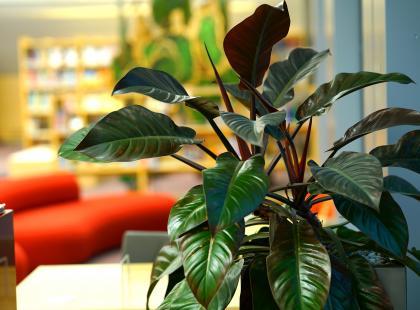 Kwiaty doniczkowe zielone - te gatunki wyglądają pięknie przez cały rok!