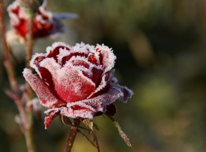 Kwiaty na balkonie zimą – jak zabezpieczyć je przed mrozem i śniegiem?