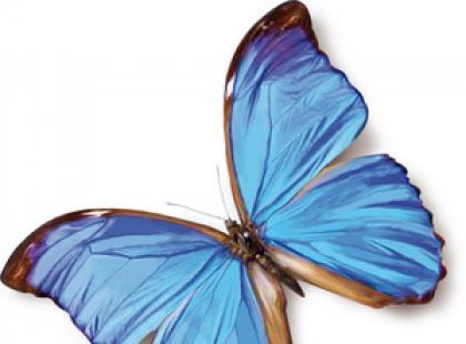 Linell Comfort podpaski delikatne jak skrzydełka motylka