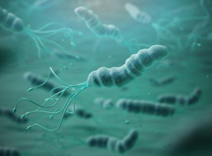 Ma ją 70% z nas. Podnosi ryzyko rozwoju zapalenia, wrzodów i raka żołądka. Co warto wiedzieć o Helicobacter pylori?