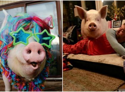 Ma miliony fanów, wydała dwie książki, mieszka z dwoma mężczyznami w domu i… jest świnią. Poznajcie Esther!