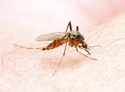Malaria – co to za choroba?