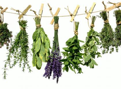 Melisa, chmiel, waleriana i lawenda - zioła na nadszarpnięte nerwy i dobry sen