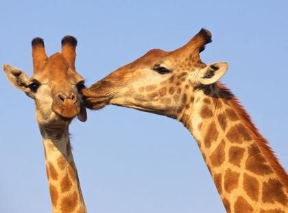 Miejsca, w których znajdziecie najbardziej urocze zwierzęta świata