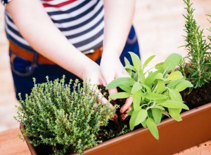 Miniogródek domowy z ziołami