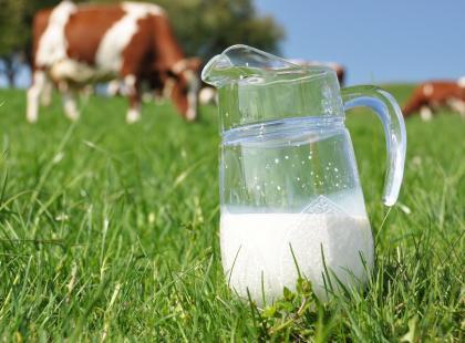 Mleko - nie dla wszystkich dobre