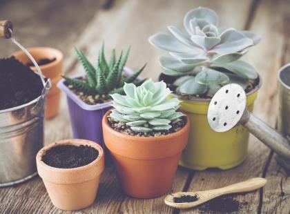 Moc herbaty - nie tylko dla ciała! Zobacz, jak herbata działa na... rośliny!