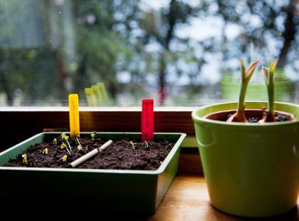 Moda na własny ogródek. Zacznij już w styczniu!