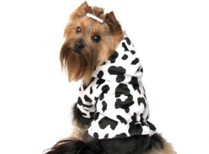 Modne ubranka dla psów